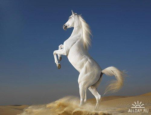 Лошади от Тim Flach.