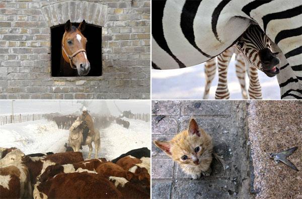Фотоподборка из жизни животных