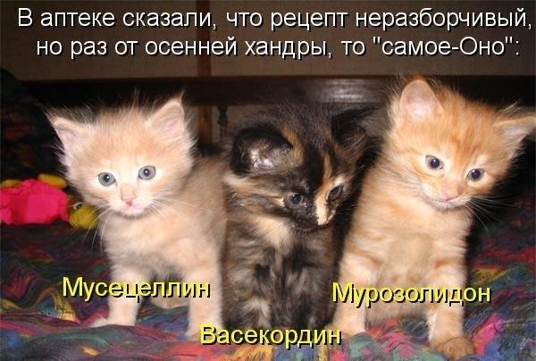 Кошачки