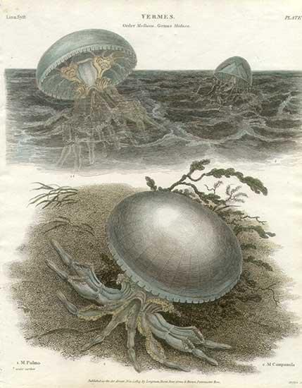 Немного рисунков медуз