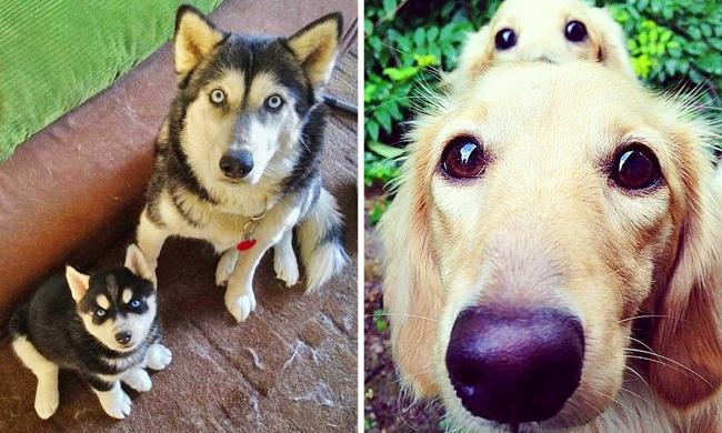Копии собак