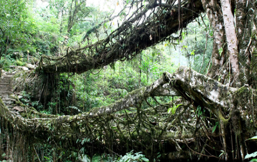 Истинная гармония с природой - живые мосты.