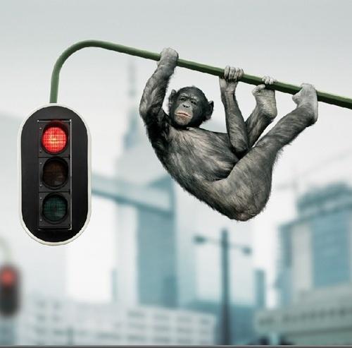 Креативные работы Koen Demuynck