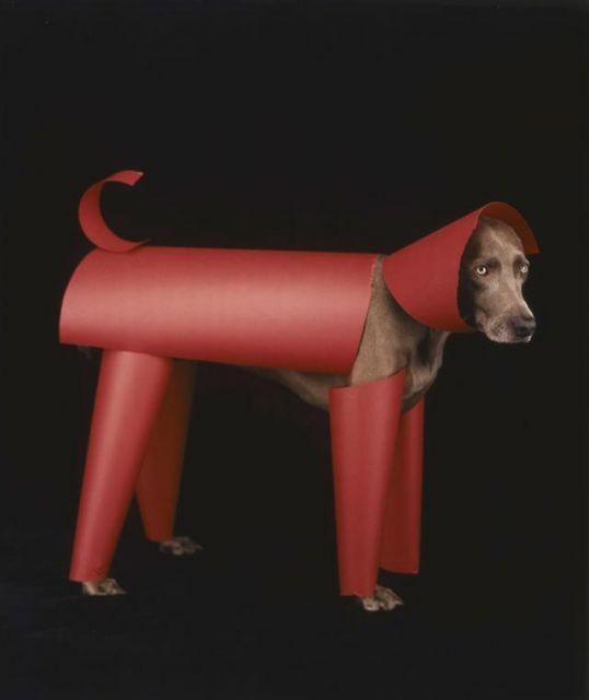 Собаки, которые очень любят позировать)