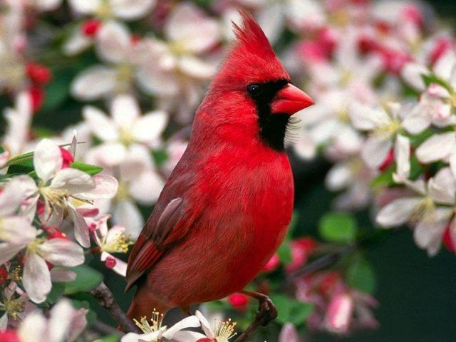 Яркие птички! ))