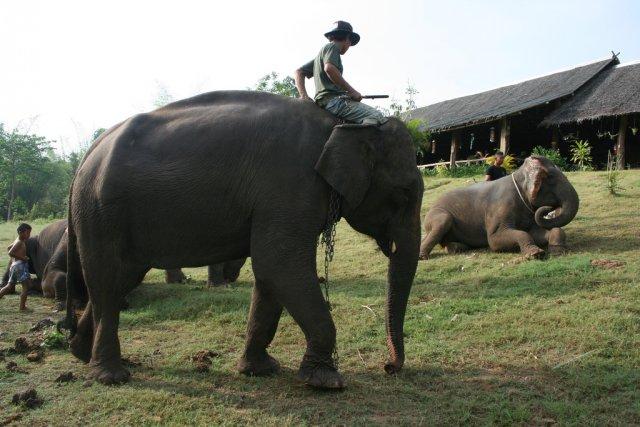 Десерт для слона