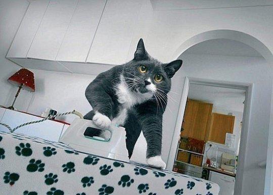 Если бы у меня был такой кот, я может, и не женился бы