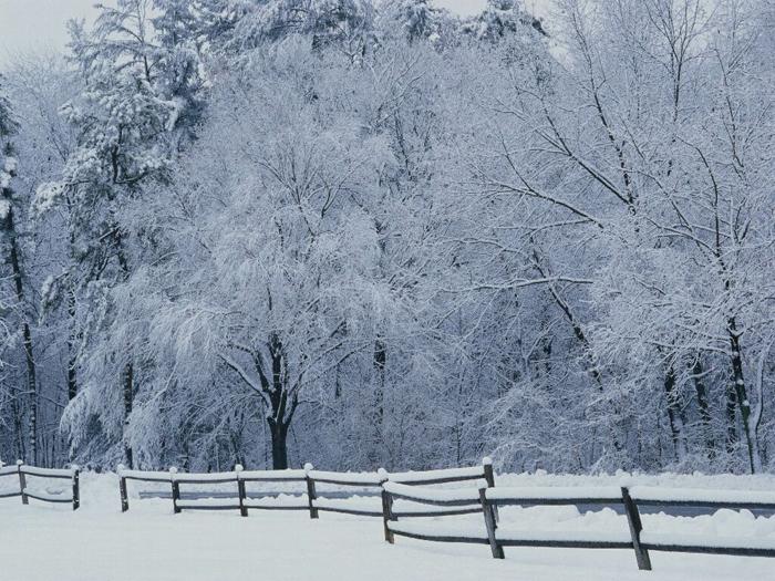 Зима (часть первая)