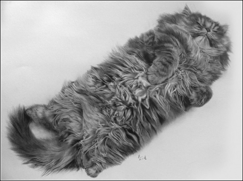Рисунки карандашом кошек от PAUL LUNG.