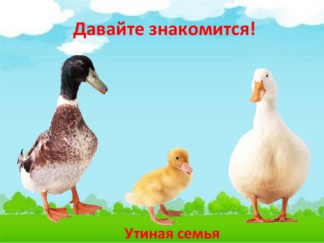 Утиная семья