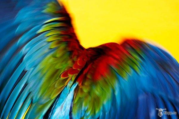 Замедленная съемка полета попугая
