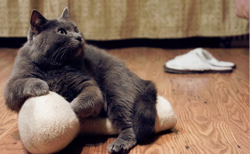 Факты о кошачей жизни