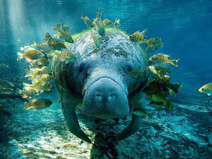 Подводный мир.