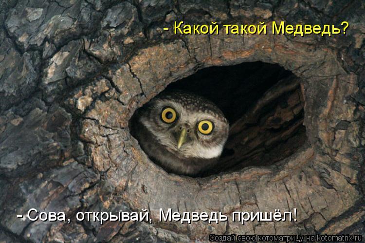 Сова, открывай! Медведь пришел!