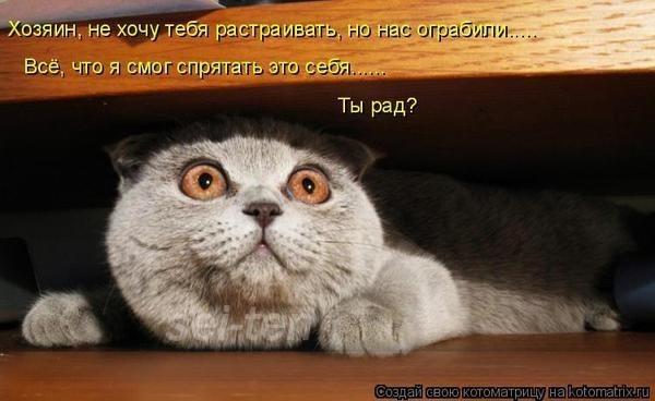 Про кошек