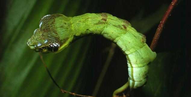 Видели как жуки сексом занимаются?
