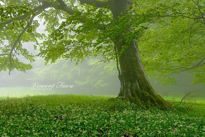 Пейзажи Vincent Favre (часть 1)