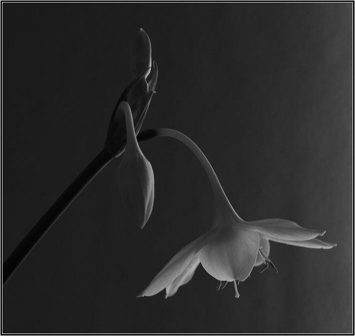 Черно-белые цветы от Jeff O'Neal.