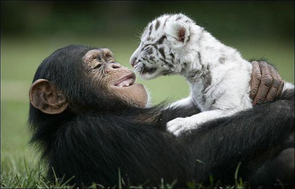 Необычные друзья.