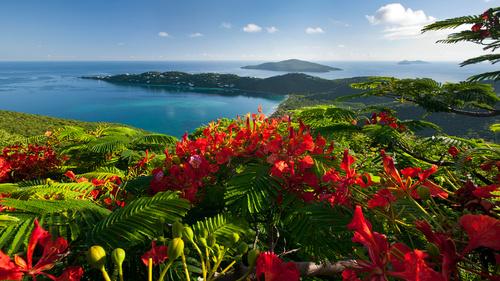 Море, горы и цветы