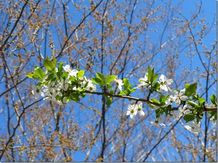 Весна. Апрель. Южный