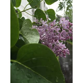 Весна, Май, Прогулка под дождем