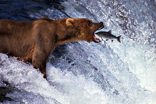 Животные... Фотограф Thomas D. Mangelsen