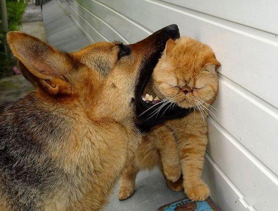 Забавные коты.