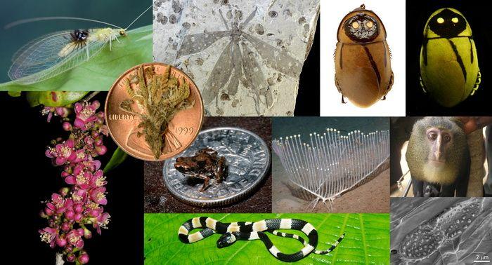 ТОП-10 самых-самых новых видов растений и животных