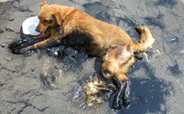 Спасение собаки.