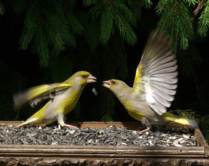 Птицы от Ирины Кожемякиной