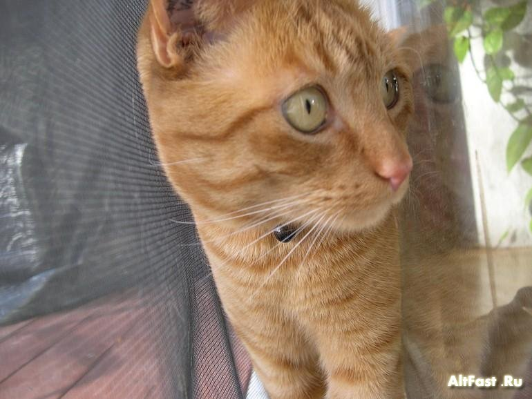 Уходя из дома проверьте не заперта ли кошка между стёкол :)