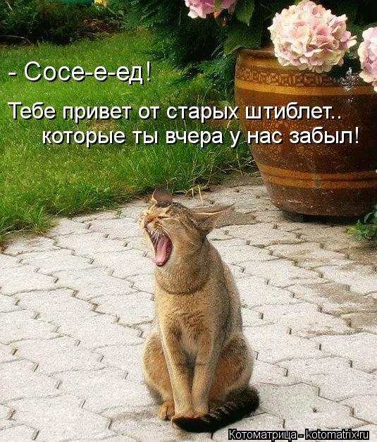 Привет от котоматрицы!