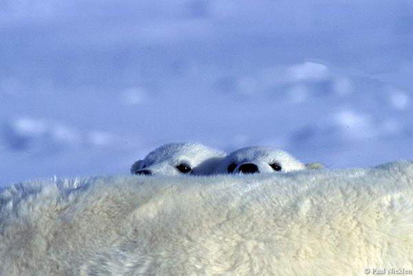 Невероятно красивые фотографии дикой природы.