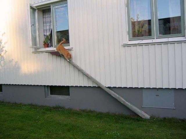 Лестницы для кошек.