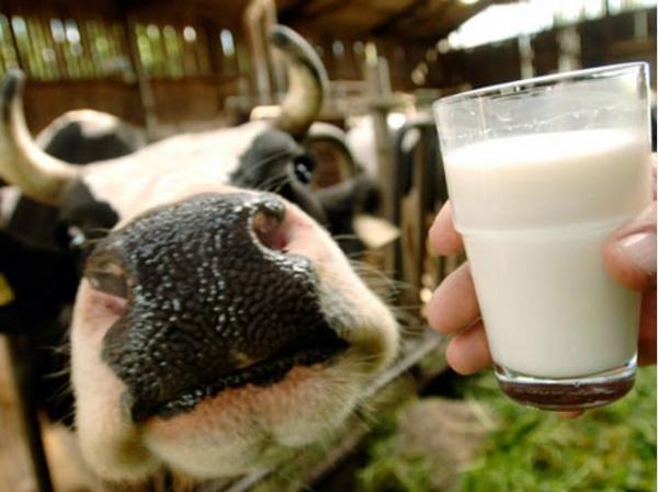 Молоко в землю...