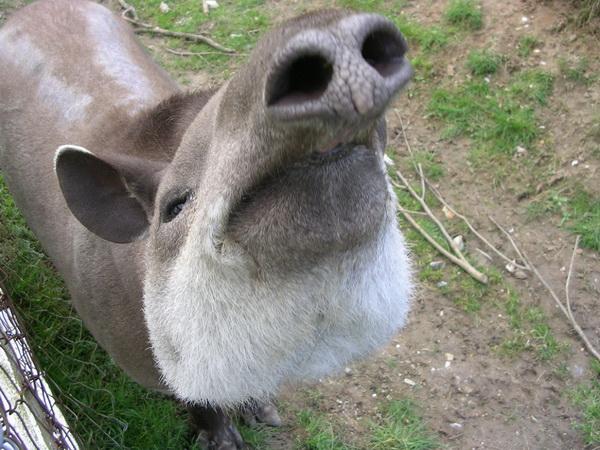 Носы у животных.