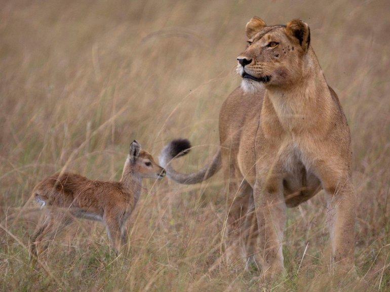Случай в животном мире