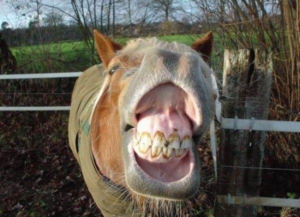 Лошадинные улыбки