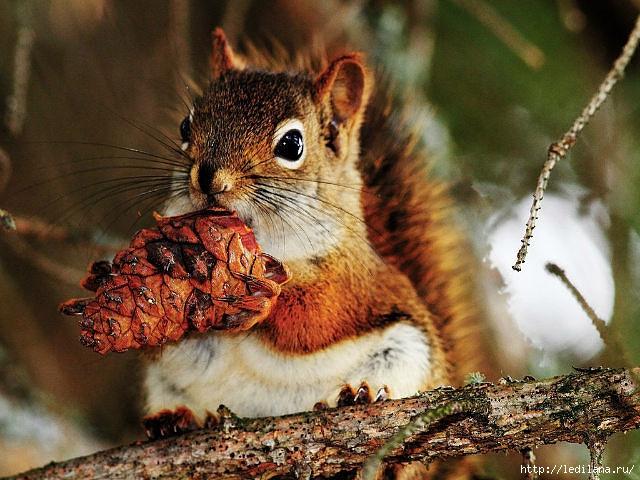 Три орешка для белочки