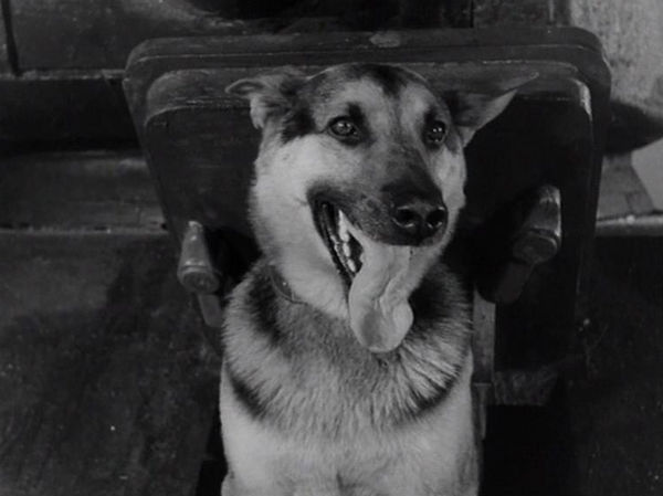 Самые знаменитые собаки