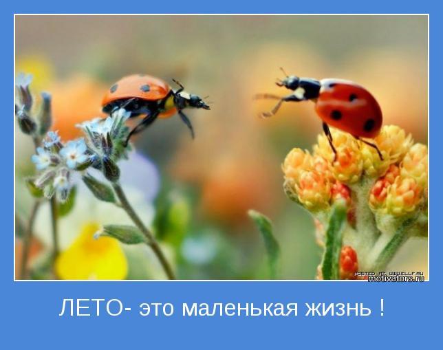 Лето-это маленькая жизнь).