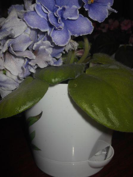 Цветы и умные горшочки.