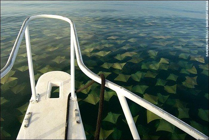 Что увидели люди во время рыбалки ?