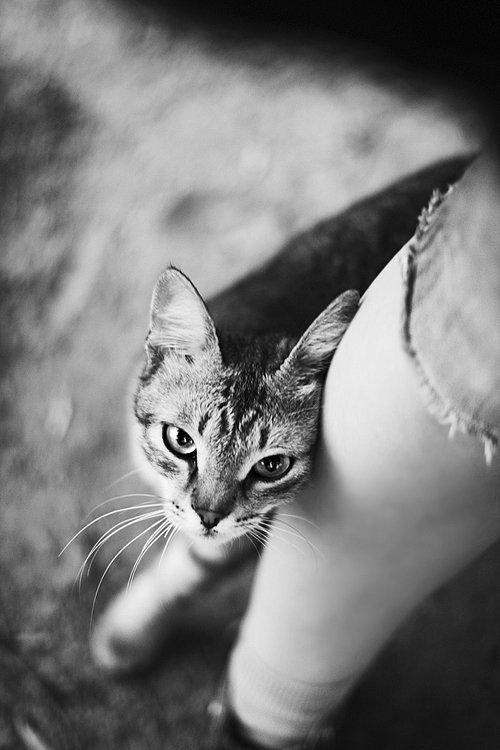 Фотограф Yakovleva Olya