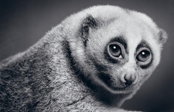Животные от Alexander von Reiswitz