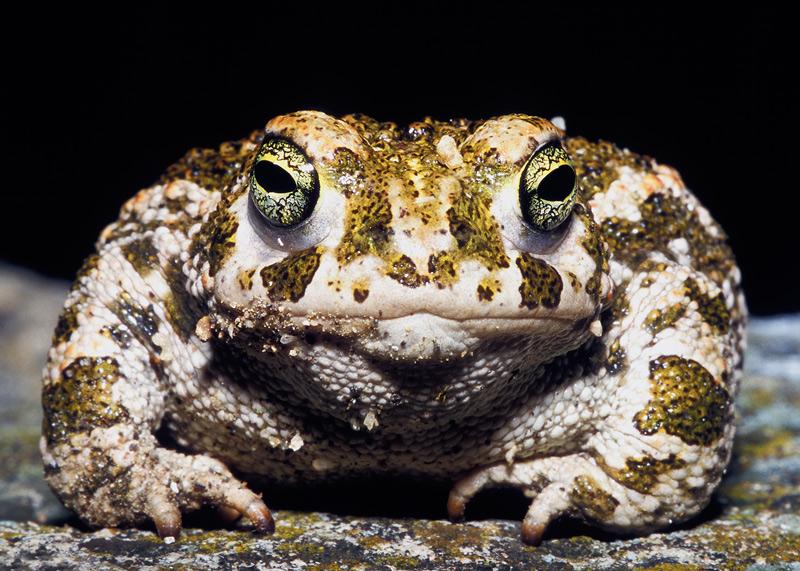 Фото жабы