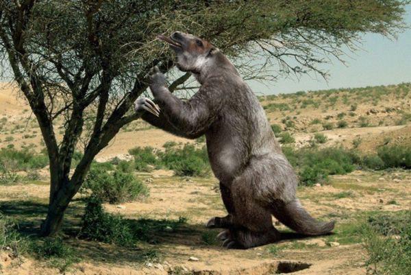 Животные - гиганты