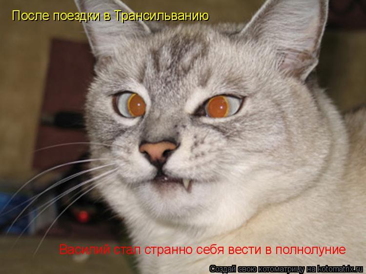 Вести с котоматрицы
