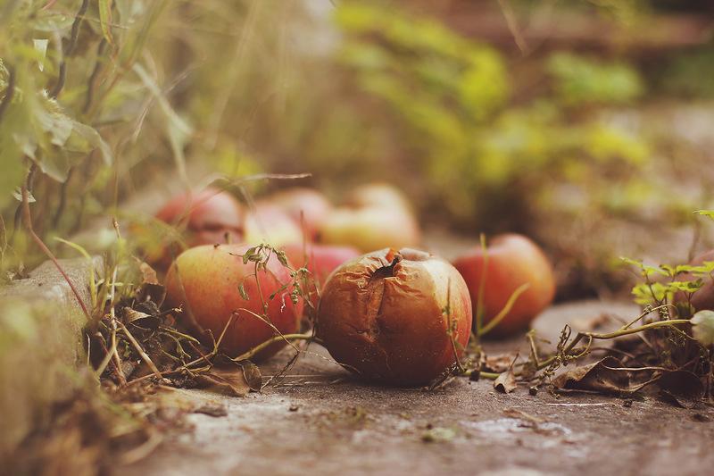 Осень (моими глазами)